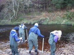 River Study in Knockree